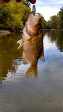 Rock Bass caught fishing Olentangy River by Tight Lines