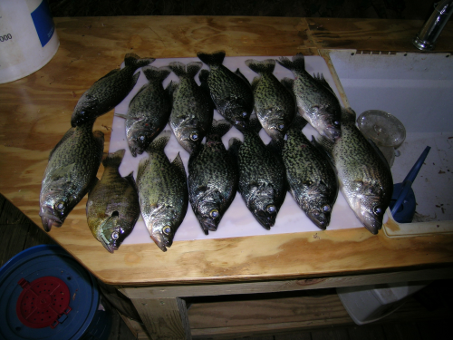 Crappie caught fishing Hickory Log Creek by Tight Lines