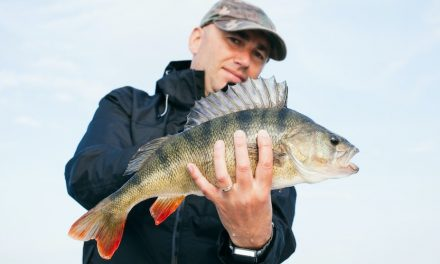 11 Best Rigs for Bass Fishing