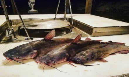 Catfishing FAQs: Do Catfish Have Scales?