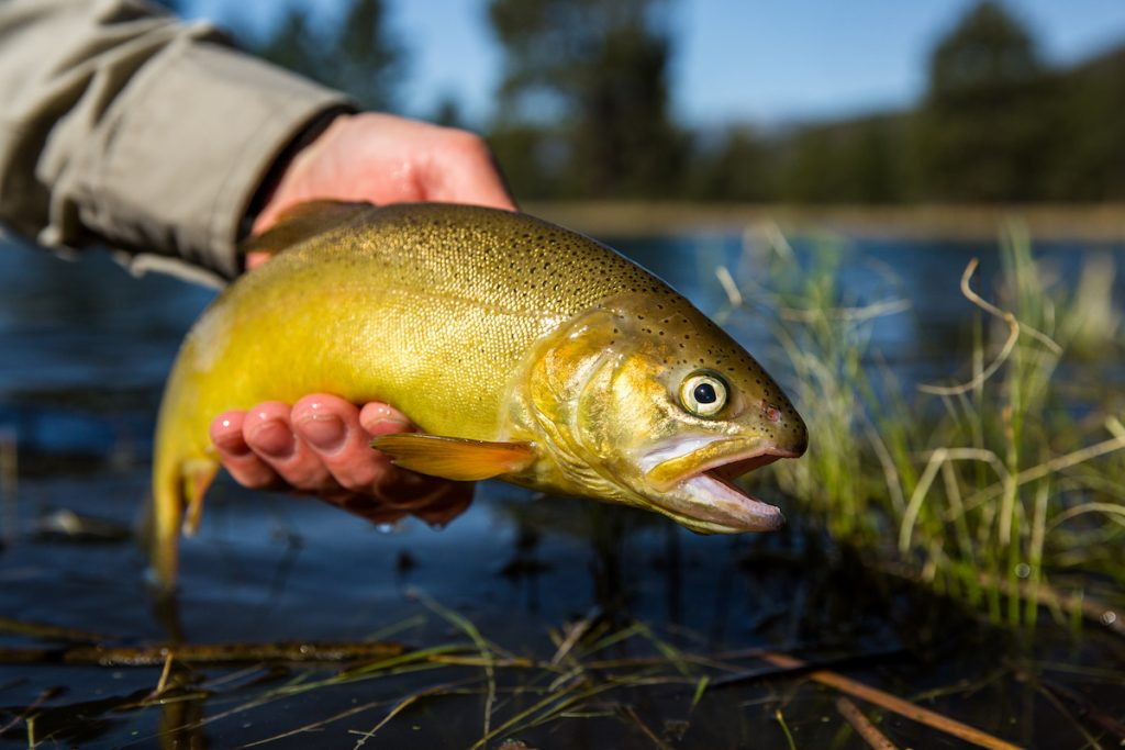 Best Trout Fishing