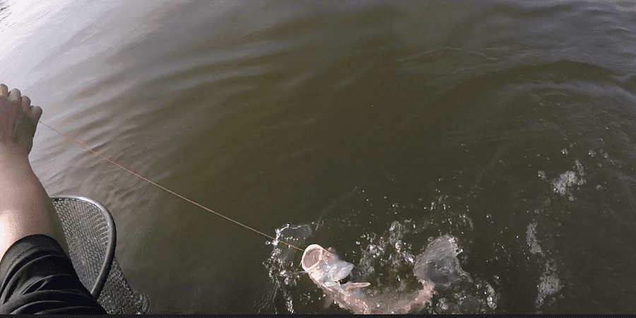Me pulling up a blue catfish in the fall with a lake in the background.