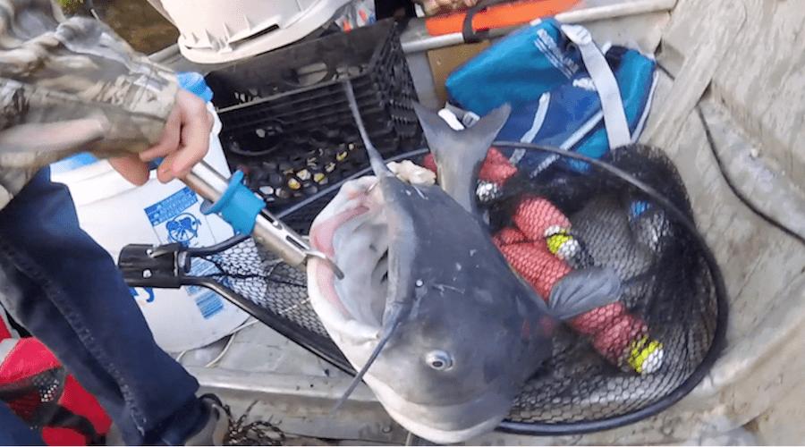 Catfishing FAQs: Do Catfish Have Teeth?