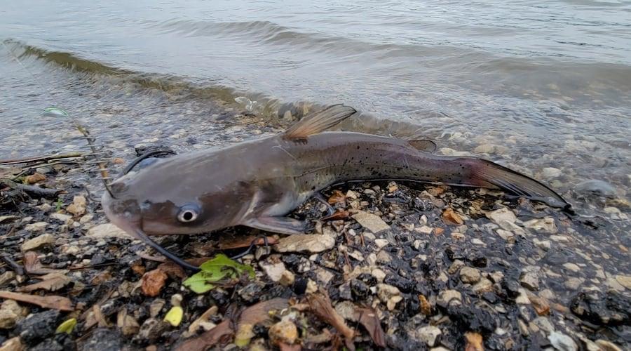 13 Exclusive Winter Catfishing Tips