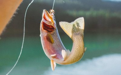 Setting Up Your Trout Tackle Box: 16 Items To Carry