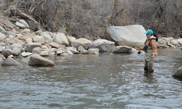 The Best Fly Fishing Rod for Any Species