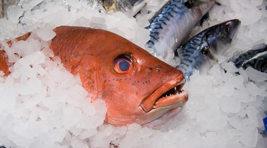 Fish on ice.