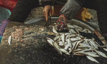 Can You Use Game Fish as Cut Bait?