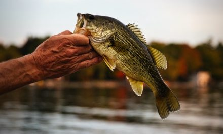 How To Catch Largemouth Bass