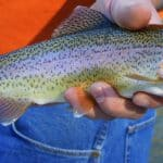 Top Trout Fishing Spots (2017 Edition)