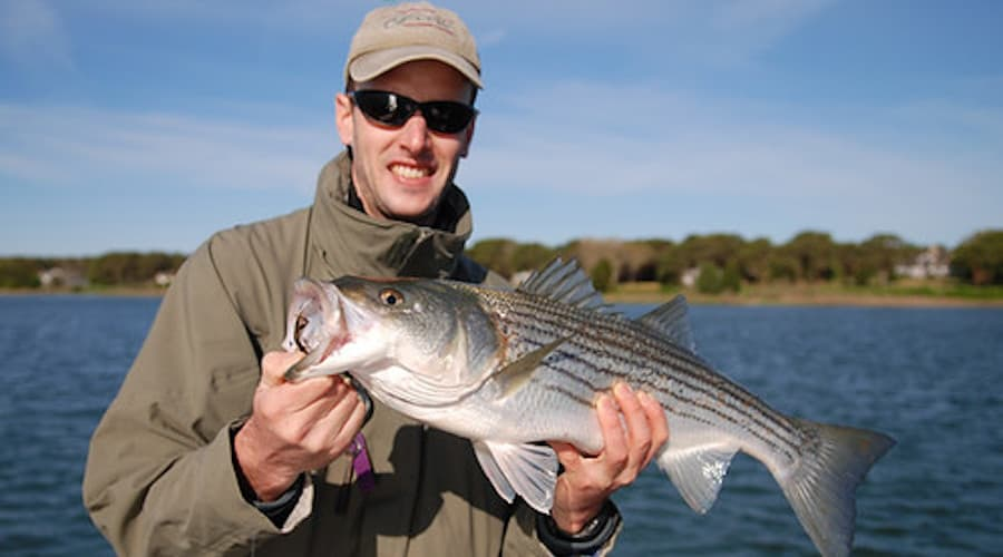 A person holding a striped bass with water in the background.