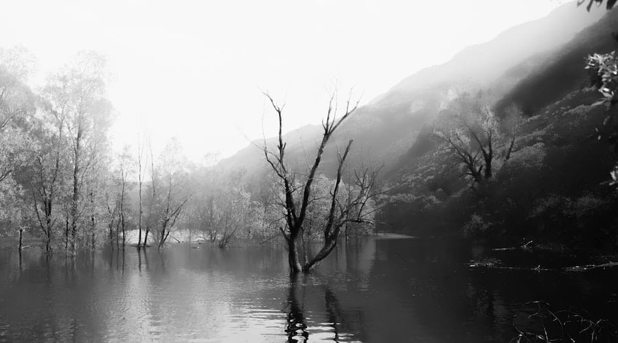 A picture of standing timber on a body of water in black and white.