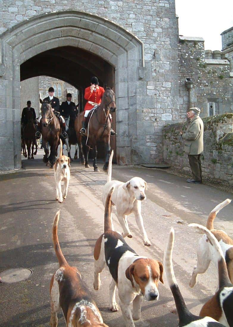 Top Hunting Dogs - Beagle
