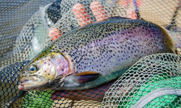 How To Target Trout