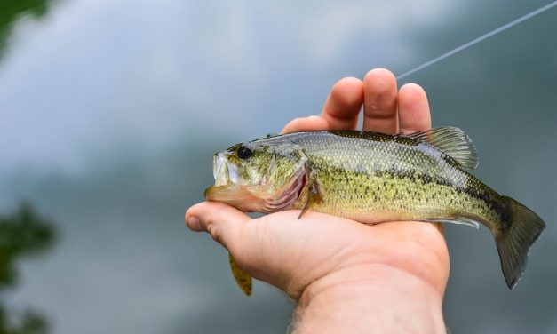 How to Fish a Wacky Rig for Bass Fishing