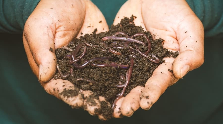 A person holding a handful of dirt and worms.