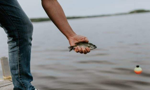 How to Catch Live Bait for Catfishing: 3 Effective Methods That Work