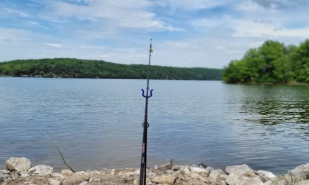 8 Best Catfish Rigs for Any Location