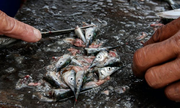 How to Fish With Cut Bait for Catfishing