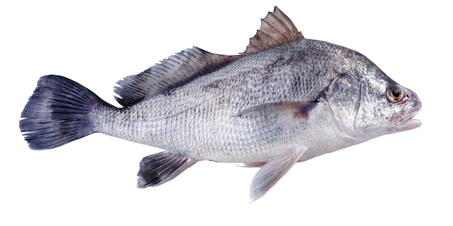 A black drum against a white background