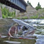 Montana Fishing Licenses