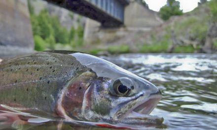Montana Fishing Licenses
