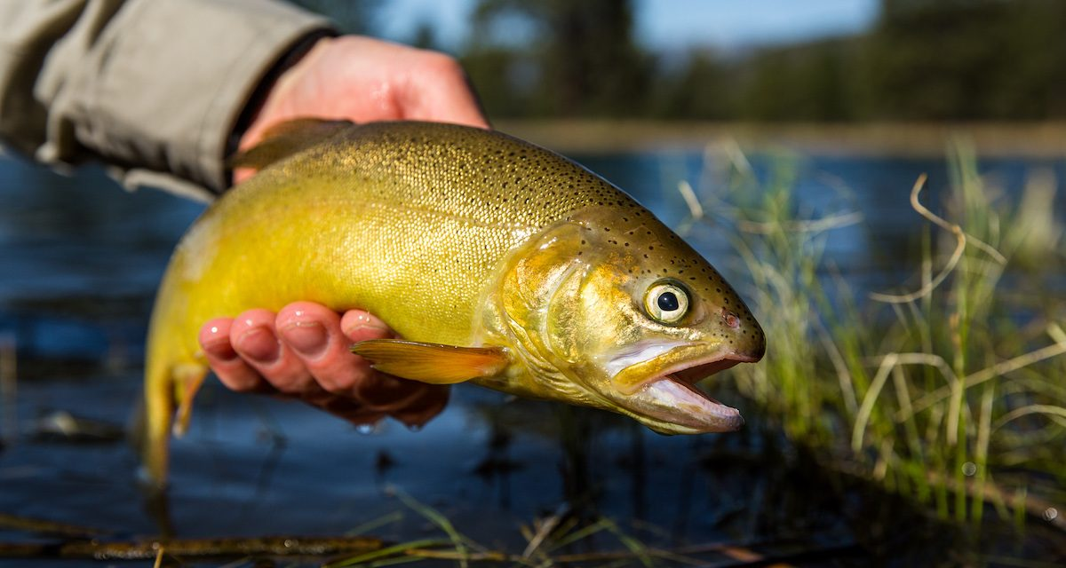 New Mexico Fishing Licenses