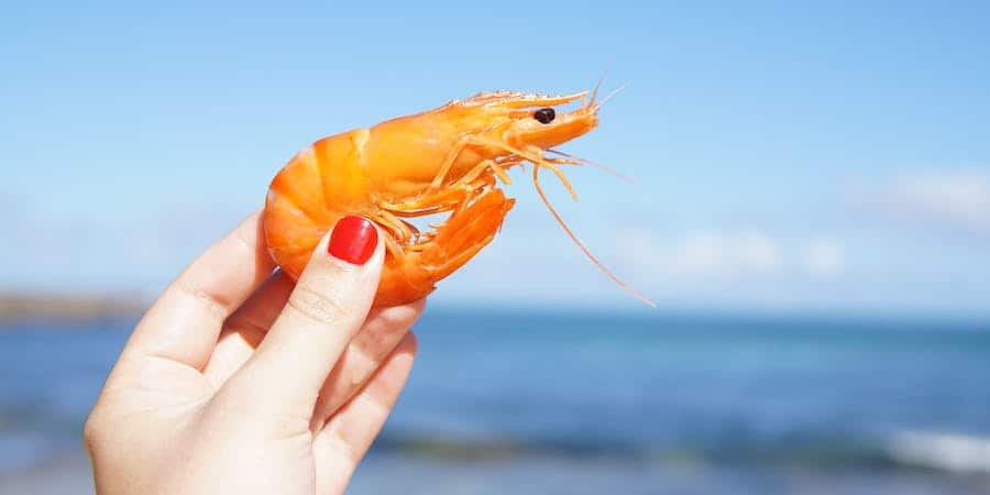 A woman wearing red nail polish, holding a shrimp with an ocean blurred in the background