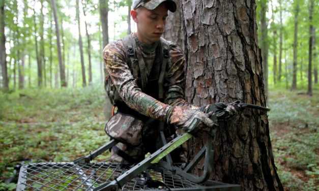 Selecting the Right Tree Stand